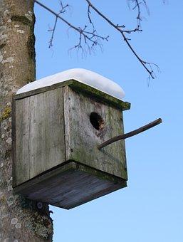 Starling, Nest, Box, Bird, Winter, Snow, Outdoor