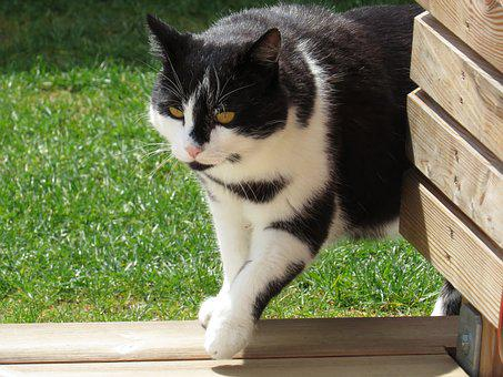 Cat, Domestic Cat, Garden, Black And White, Sweet