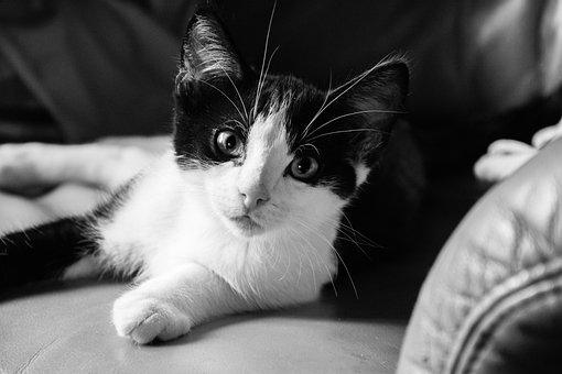 Cat, Kitten, Animal, Pet, A Young Kitten, Domestic Cat