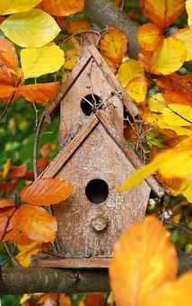 Aviary, House, Bird Feeder, Colorful, Color, Bird