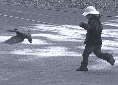 Child, Pigeon, Catch, Bird, Dove, Childhood, Human