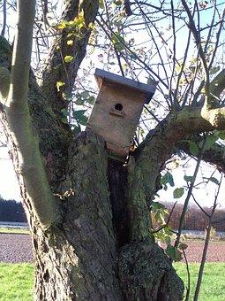 Autumn, Bird Feeder, Tree, Orchard, Log, Nature