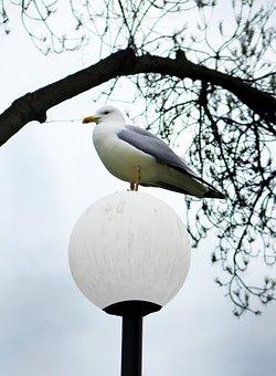 Seagull, Bird, Nature, Sea, White, Sky, Gull, Flight