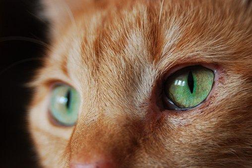 Cat, Adidas, Mieze, Red Tomcat, Cat's Eyes, Mackerel