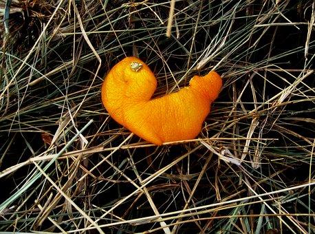 Orange Peel, Orange, Bright, Citrus, Piece, Discarded