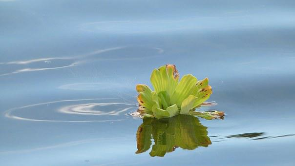 Plant, River, Wather, Nature, Green, Natural, Water