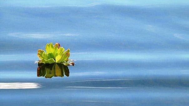 Aqua, Pond, Plant, River, Wather, Nature, Green
