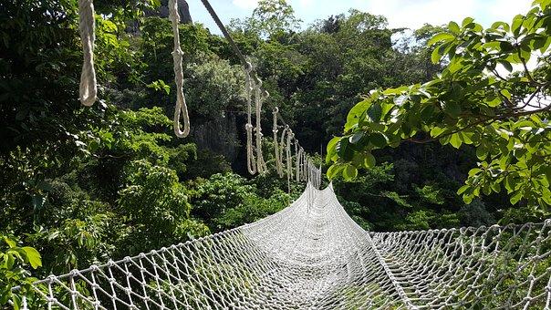 Bridge, Forest, Hanging Bridge, Net, Outdoors