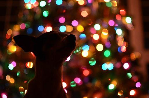 Dog, Christmas Tree, Dark, Lights, Colorful, Silhouette