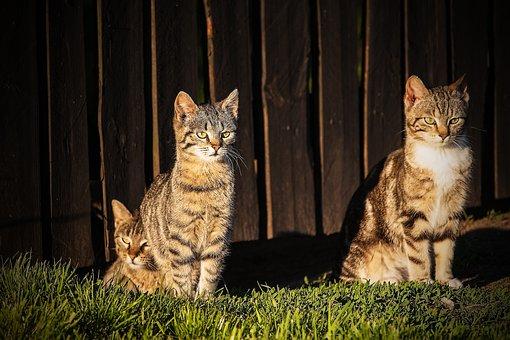 Cats, Roof Top Cat, Pet, Charming, Cat, A Normal Cat