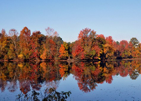 Pond, Fall, Serene, Lake, Park, Autumn, Forest, Foliage