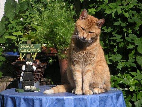 Cat, Red Tomcat, Mackerel, Red, Yellow