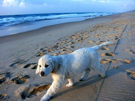 Puppy, Coast, Sand, Waves, Blue, White, Israel