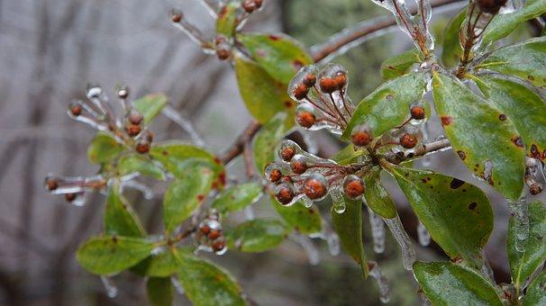 Plant, Winter, Ice, Frozen, Thick, Layer, Cold, Season