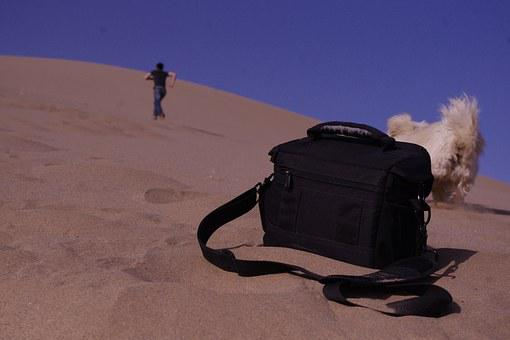 Tourism, Mingsha, Dunhuang, Puppy, Warm, The Scenery