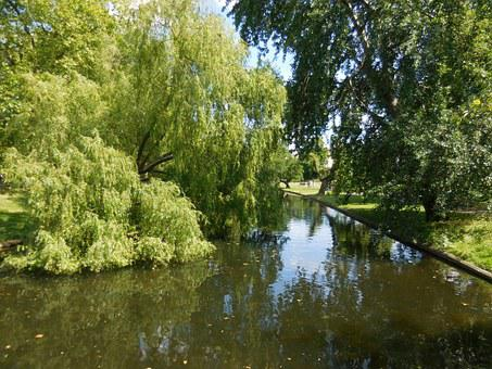 Park, Regent's Park, London, England, Europe, Green, Uk