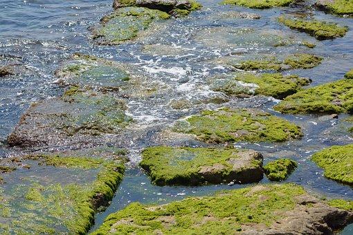 Sea, Water, Stone, Alga, Foam