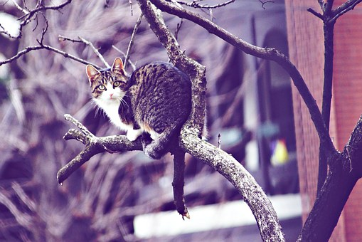 Cat, Stray, He Is Climbing Up A Tree, Animal