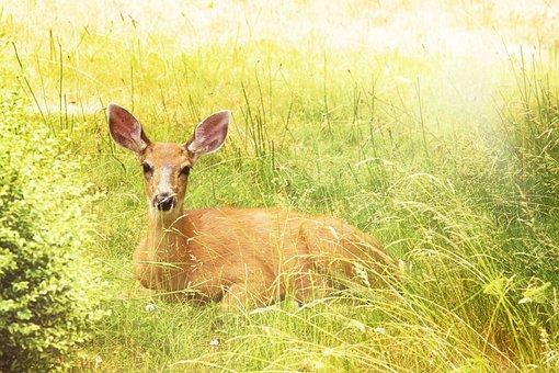 Deer, Yellow, Nature, Mammal, Antlers, Autumn, Park