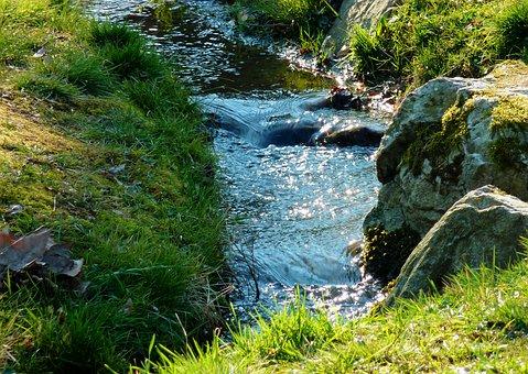 Bach, Creek, Brook, Trees, Embankment, Recovery, Rock