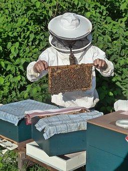 Beekeeper, Breeding Aflegger, Bees