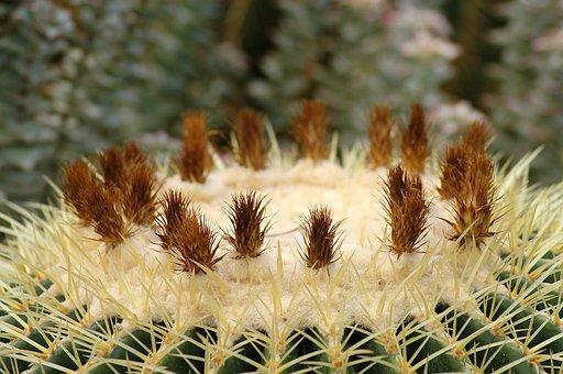 Arboretum, Cactus, Flowers, Botanical Garden