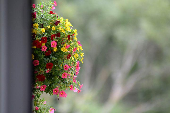 Flowers, Background, Balcony, Gray, Colorful, Pink