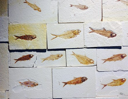 Fossil, Stone, Fish, Petrification, Prehistoric Times