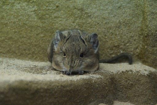 Proboscis Jerboa, Mouse, Fly On The Wall, Crouch