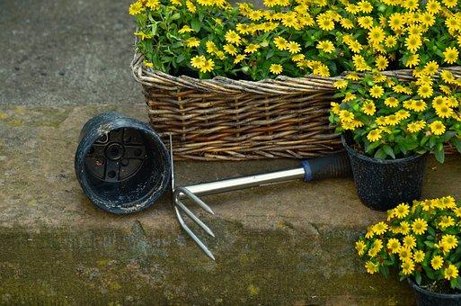 Garden, Gardening, Plant Flowers, Hoe, Plant