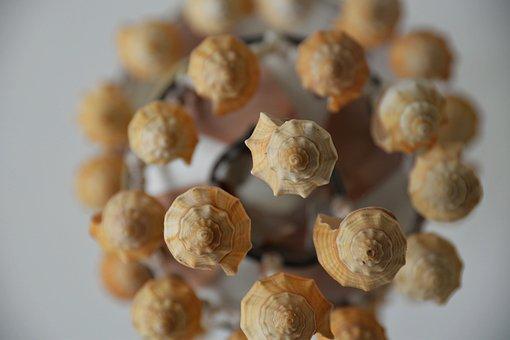 Chandelier, Shells, Sea Shells, Lamp, Light, Antique