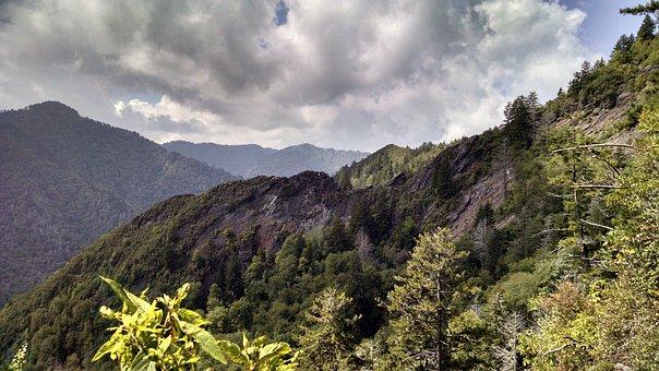 Great Smokey Mountains, Mountains, Te, Forest
