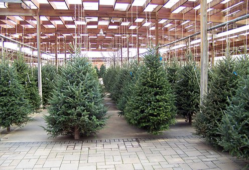 Christmas, Trees, Nursery, Winter, Xmas, Decoration