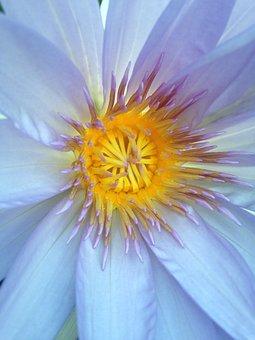 Flower, Nature, Color, Petal, Petals, Pollen, Flowers
