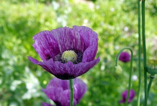 Poppy, Grasshopper, Violet, Dashing, Colored