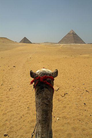 Cairo, Egypt, Camel, Egyptian, Desert, Pyramids, Sand