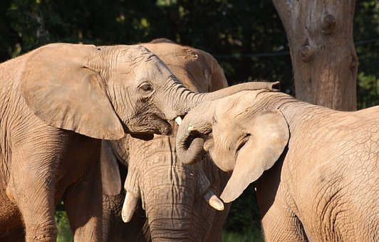 Elephants, Parents, Child, Three, Love, Cares, Caring