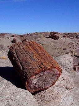 Petrified Tree, Arizona, Petrification, Log, Old, Usa