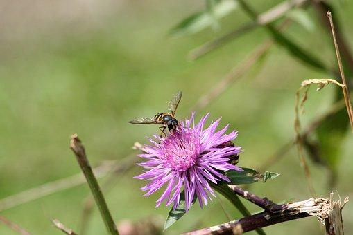 Field, Flower, Meadow Flower, Wild Flower, Meadow