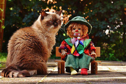 Doll, Clown, Sad, Bank, Cat, British Shorthair, Race