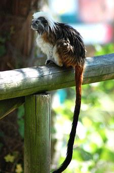 Monkey, Zoo, Animals, Nature, Rest, Wood, Colors, Italy
