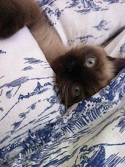 Kitten, Playful, Cat, Eye, Kitten Face, Animal, Bed