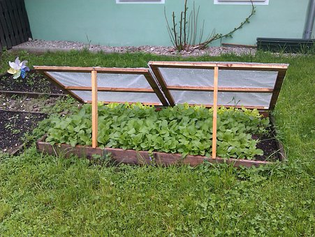 Cold Frame, Spring In The Garden, Garden, Bed Of Salad