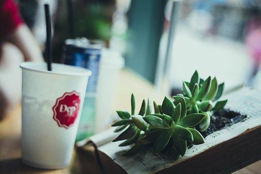Coffee, Creative, Cup, Drink, Indoors, Leaf, Plant