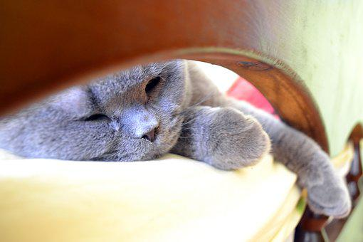 Cat, Vacation, Bed, Lying In Bed, Relaxation