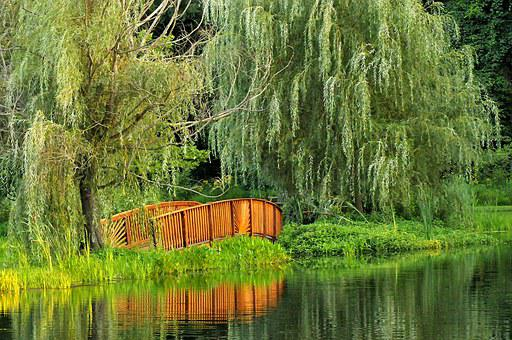Bridge, Park, Scenery, Virginia, Water, Peaceful