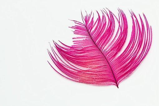 Feather, Desktop Wallpaper, Ostrich Feather, Pink
