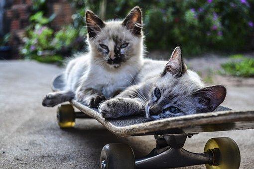 Cat, Skateboard, Ride, Pets