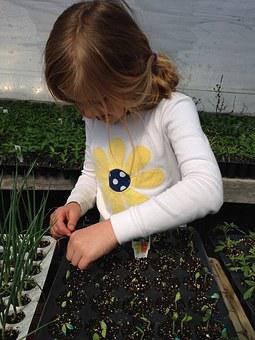 Child Planting, Seeds, Starting Plants, Greenhouse