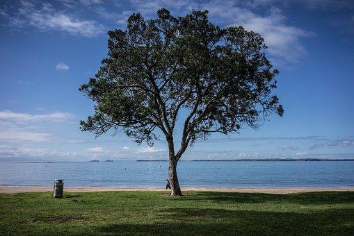 Tree, Nice View, Beautiful View, Minimal, View